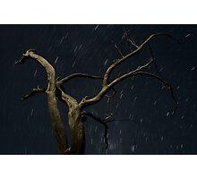 Moonlight and stars, Labyrinth, Tasmania Photographic Print