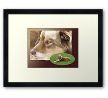 Australian Shepherd  May Framed Print
