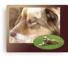 Australian Shepherd  May Canvas Print