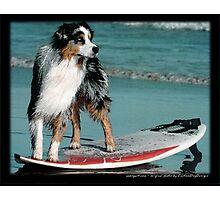 Australian Shepherd Jun Photographic Print