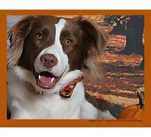 Australian Shepherd Oct Photographic Print
