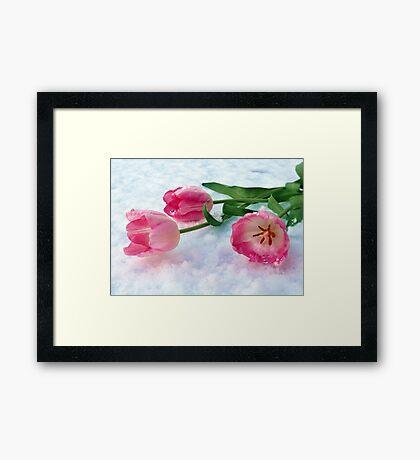 Tulips & Snow Framed Print