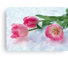 Tulips & Snow Metal Print