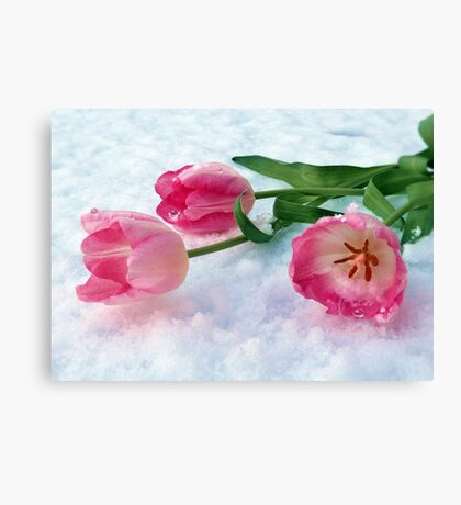 Tulips & Snow Canvas Print