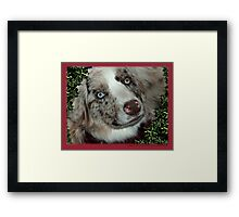Australian Shepherd Dec Framed Print