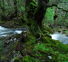 Mother Cummings Rivulet scene, Tasmania by tasadam