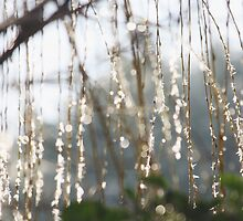 Sparkling ice crystals on weeping willow by Lizzy Doe