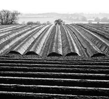 Ploughed Field 01 (Northamptonshire) by Pete Edmunds