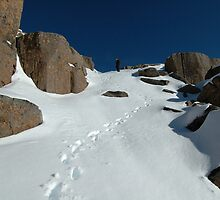 Climbing Mt Ossa, Tasmania by tasadam