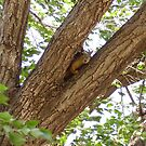 Tree Squirrel by R&PChristianDesign &Photography