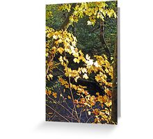 """""""Maple Leafs In The Afternoon Sun"""" Greeting Card"""