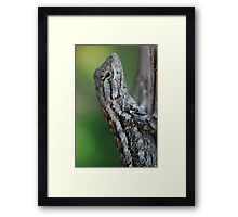 Scaled Beauty Framed Print