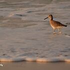 Wading for You! by Sandy Woolard