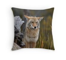 Mr.Wylie Coyote Throw Pillow