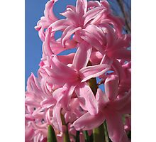 Pink Hyacinths to the Sky Photographic Print