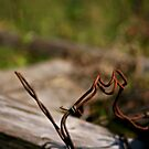 Barbed by Che Graves