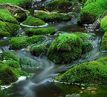 Tasmanian rainforest stream by tasadam
