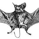 "Bat ""Tickle Me"" by Jeffrey Neumann"