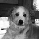 dog  by Matthew  Smith