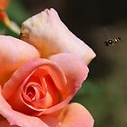 Bee approaching Valerie Swane by georgieboy98