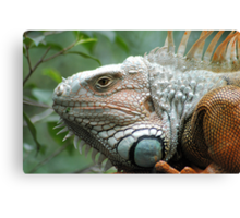 Close to the Iguana Canvas Print