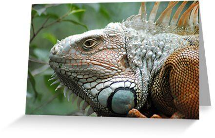 Close to the Iguana by Donna Adamski