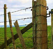 The fence by KarenMccallum