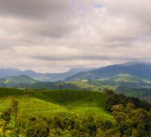 Tea Plantation & Forest Sticker