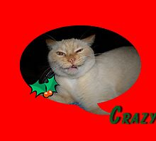 Crazy Cat Christmas Card by Jonice