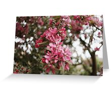 Spring cherry blossom - Cambridgeshire, England Greeting Card