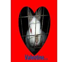 Valentine  Bunny Rabbit Card Photographic Print