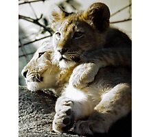 Lion Cubs Photographic Print