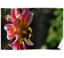 Falls Last Nectar Poster