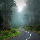 A Wendy Way, Yarra Ranges. by Ern Mainka