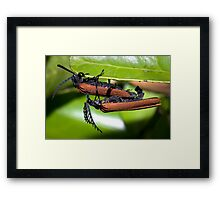 XXX rated natural history Framed Print