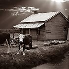 Cow and shed by DaveBassett