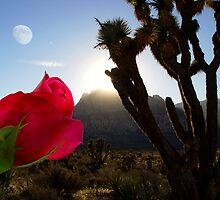 Desert Rose by digitalmidge