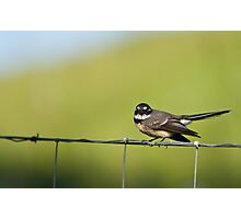 Angry Little Bird Photographic Print