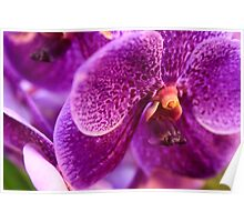 Orchid in Macro Poster