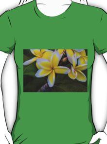 Yellow & White T-Shirt