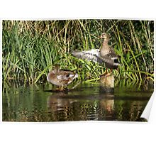 Stretch-and-flap duck routine Poster