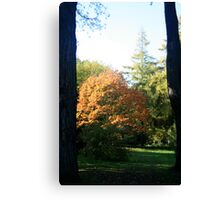 Between two Trees Canvas Print