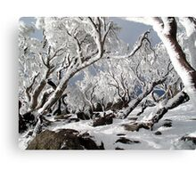 Snowgums 3 Canvas Print