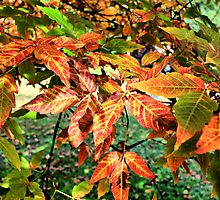 Autumn Arrives by duroo
