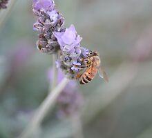 Busy Bee by Leanne Davis
