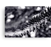 Monkey Puzzle Bokeh Canvas Print