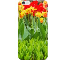 Tulips on Fire iPhone Case/Skin