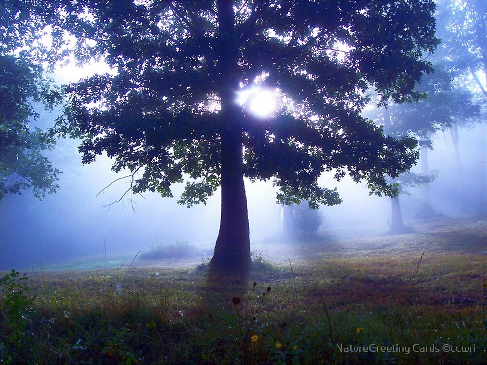 Lone Tree by NatureGreeting Cards ©ccwri
