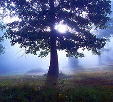 Lone Tree by NatureGreeting Cards ©ccwri