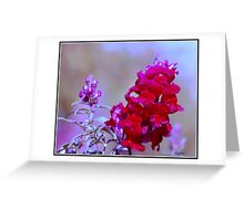 Lavender and Light Greeting Card